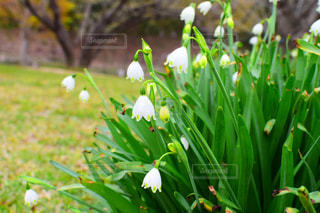 花が草の中に立っているの写真・画像素材[2117437]