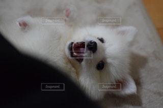 犬の接写の写真・画像素材[2117472]