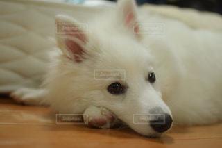 犬の接写の写真・画像素材[2121378]