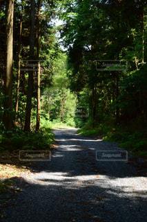 生い茂る木の写真・画像素材[2156391]