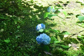 花園のクローズアップの写真・画像素材[2220609]