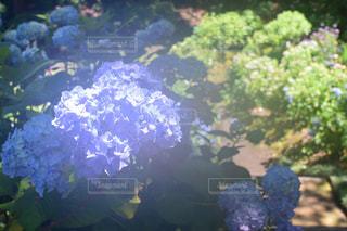 庭の緑の植物のクローズアップの写真・画像素材[2220612]