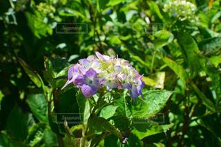 花園のクローズアップの写真・画像素材[2220614]
