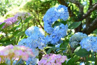 花園のクローズアップの写真・画像素材[2220615]