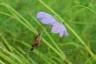 花の写真・画像素材[2598043]
