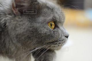 猫の写真・画像素材[2638234]