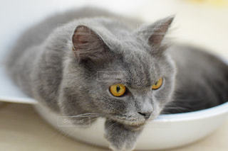 猫の写真・画像素材[2638235]