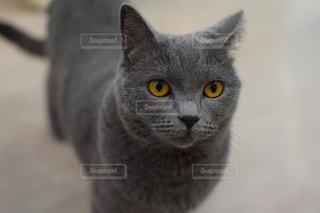 猫の写真・画像素材[2638236]