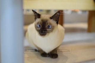 猫の写真・画像素材[2638242]