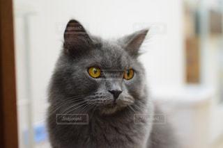 猫の写真・画像素材[2638276]