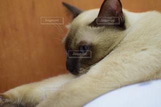 猫の写真・画像素材[2638278]