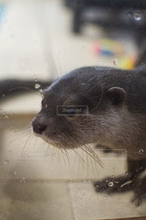 動物をクローズアップするの写真・画像素材[2825033]