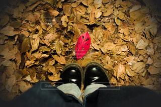 黒い靴の写真・画像素材[2825047]