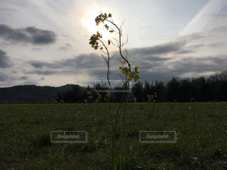 背景に木がある大きな緑の野原の写真・画像素材[2121197]