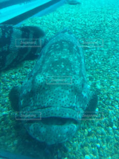 水中で泳いでいる魚の写真・画像素材[2127157]
