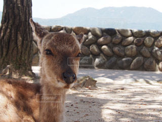 鹿の写真・画像素材[2124788]
