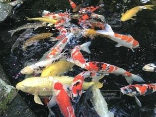 水中の魚の一団の写真・画像素材[2118276]