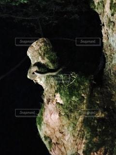 熱田神宮の白ヘビの写真・画像素材[2118387]
