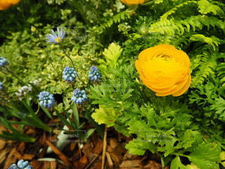 花のクローズアップの写真・画像素材[2119079]