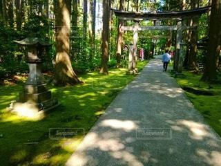 神社へ通じる道の写真・画像素材[2119732]