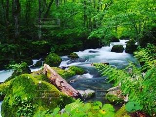 渓流の写真・画像素材[2122783]