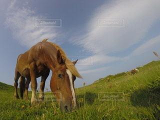 緑豊かな野原の上に立っている馬の写真・画像素材[2122854]