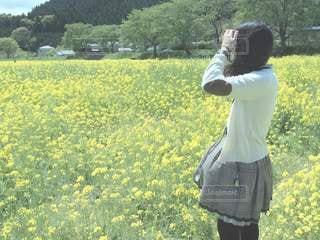 菜の花畑の写真・画像素材[2783451]
