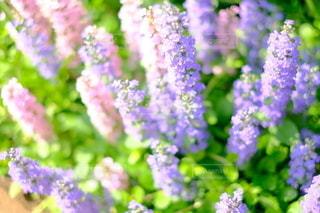花のクローズアップの写真・画像素材[2142355]