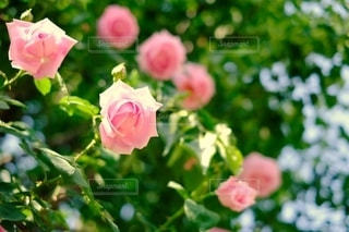 花の写真・画像素材[2143796]