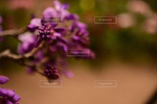 花のクローズアップの写真・画像素材[2121774]