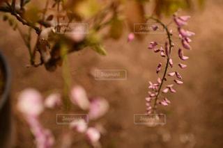 花のクローズアップの写真・画像素材[2121845]