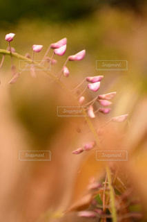 花のクローズアップの写真・画像素材[2121848]