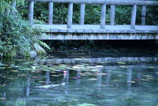 モネの池の写真・画像素材[2123525]