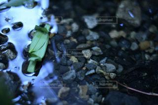 笹舟の写真・画像素材[2123529]