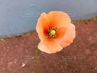 花のクローズアップの写真・画像素材[2132793]