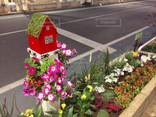 小さい赤い家と花壇の写真・画像素材[2139898]