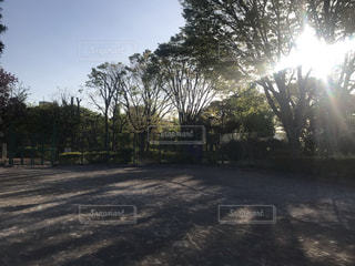 早朝の公園の写真・画像素材[2119770]