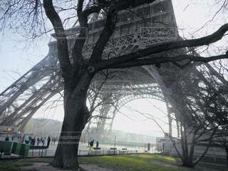 公園の大きな木の写真・画像素材[4175544]