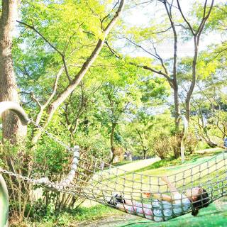 緑の中でリラックスタイムの写真・画像素材[651443]