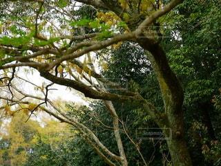 森林の風景の写真・画像素材[2164132]