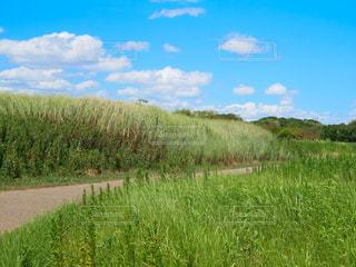 緑豊かな野原の接写の写真・画像素材[2173405]