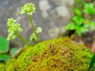 緑の植物のクローズアップの写真・画像素材[2175831]