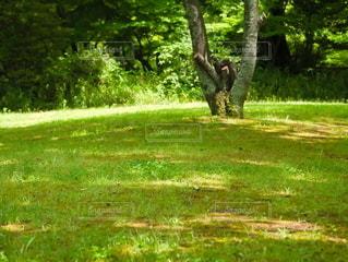 緑豊かな野原に立っている樹木の写真・画像素材[2183029]