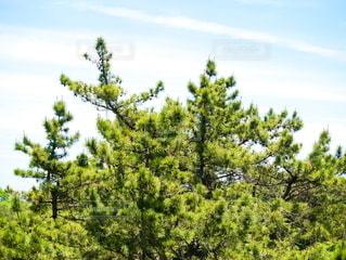 木のクローズアップの写真・画像素材[2204190]