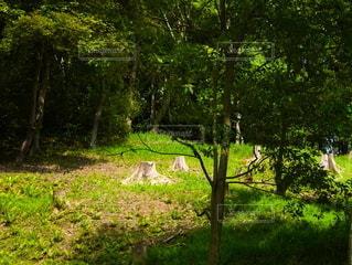 緑豊かな公園の写真・画像素材[2218663]