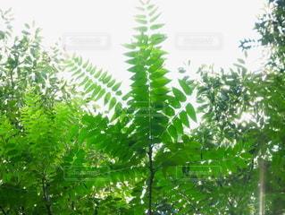 森の中の植物の写真・画像素材[2381772]