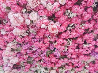 一面のバラの写真・画像素材[2242345]