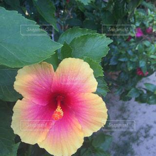 花のクローズアップの写真・画像素材[2179864]