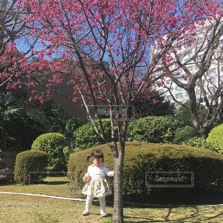 桜の木の隣に立っている1歳の女の子の写真・画像素材[1105700]