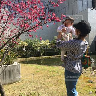 桜の木の前で女の子を高い高いしているママの写真・画像素材[1105796]